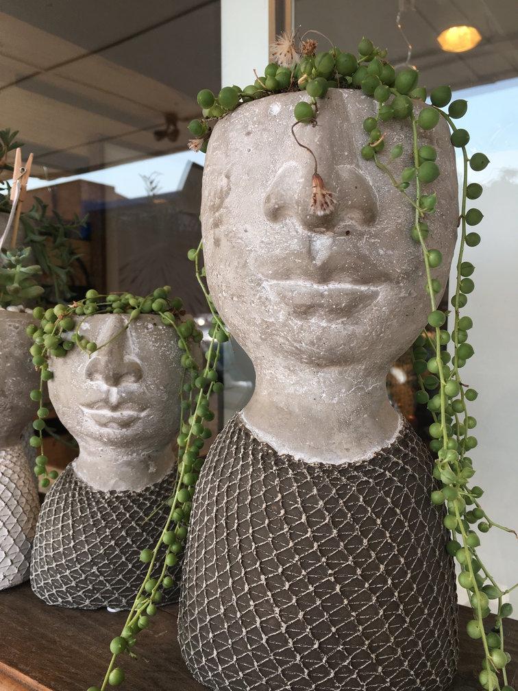Succulent Heads